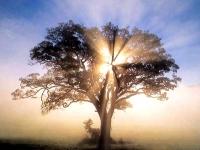 Dub, západ Slunce