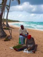 Kokos na pláži