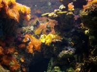 Mořské řasy