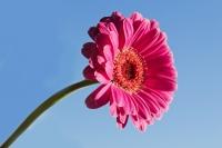 Pěkná květina