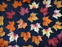 Podzim barevné listy
