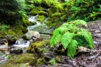 Terapie přírodou