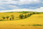 Venkovské pole