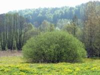 Terapie zelenou přírodou